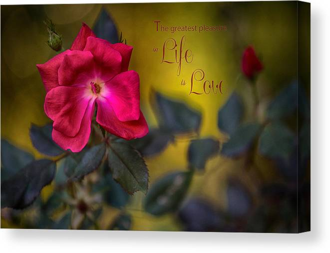 Roses Canvas Print featuring the photograph In Love With Message by Mary Buck