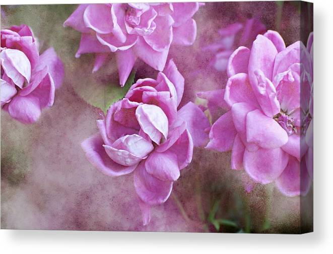 Flowers Canvas Print featuring the photograph In Pink by Diana Angstadt