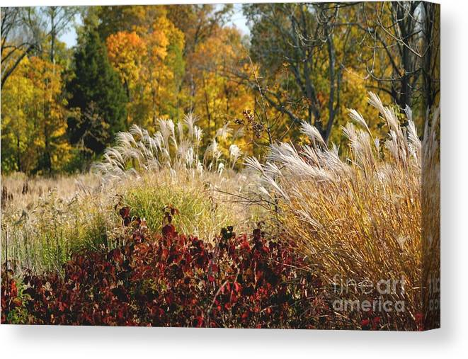 Autumn Canvas Print featuring the photograph In The Meadow 2 by Living Color Photography Lorraine Lynch