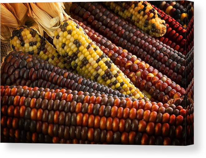 Corn Canvas Print featuring the photograph Indian Corn by Mark McKinney