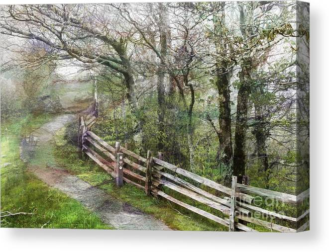 Nature Canvas Print featuring the photograph Into The Woods by Anne Pendred