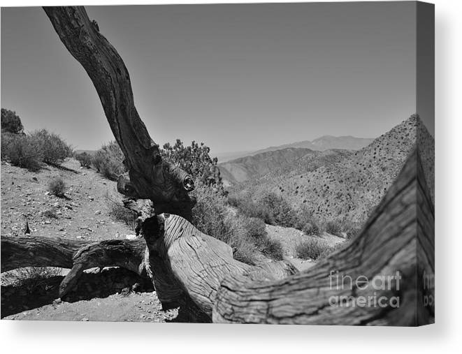 Joshua Tree Canvas Print featuring the photograph Joshua Tree Black And White by Dave Hutchinson
