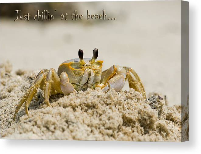Greeting Card Canvas Print featuring the photograph Just Chillin On The Beach by Jeff Abrahamson