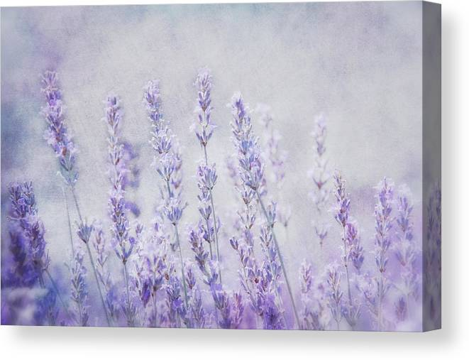 Lavender Canvas Print featuring the photograph Lavender Romance by Claudia Moeckel