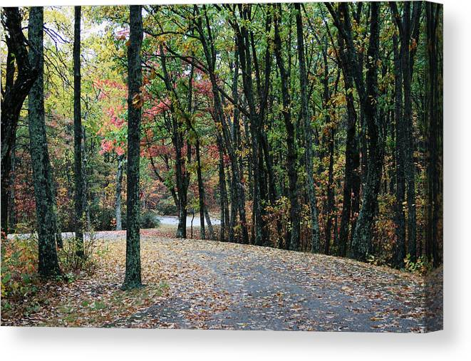 Fall Color Canvas Print featuring the photograph Leafy Trail by Philip Hartnett