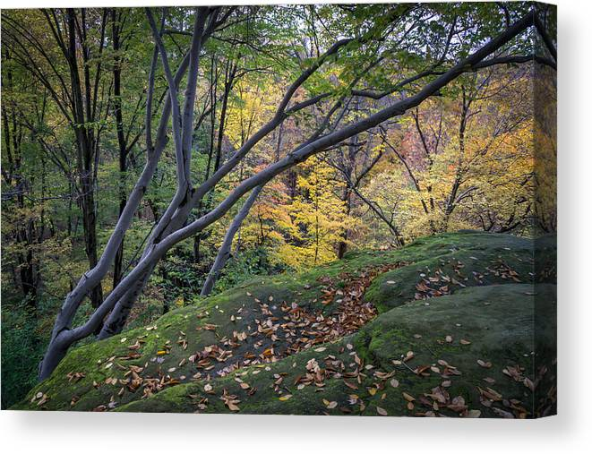 Cuyahoga Canvas Print featuring the photograph Ledges Overlook Trail 6 by Denny Beck