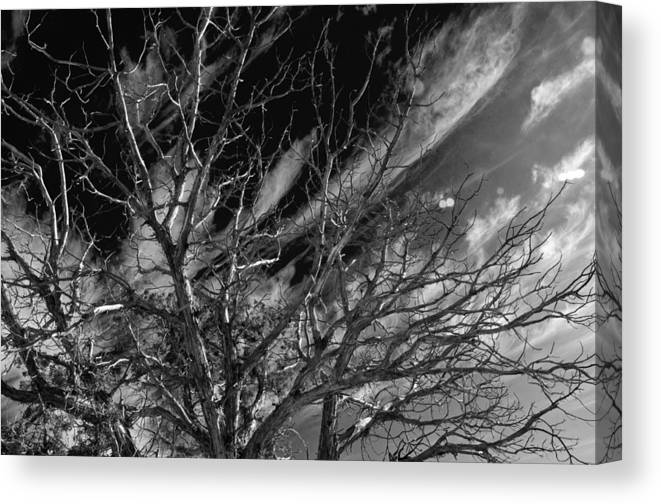 Pinion Canvas Print featuring the photograph Lifes End by Eric Rundle