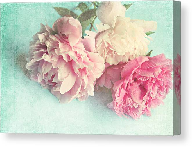 Peony Canvas Print featuring the photograph Like Yesterday by Sylvia Cook