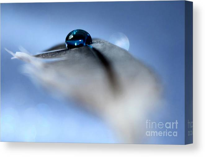 Feather Canvas Print featuring the photograph Listening For Hope by Krissy Katsimbras