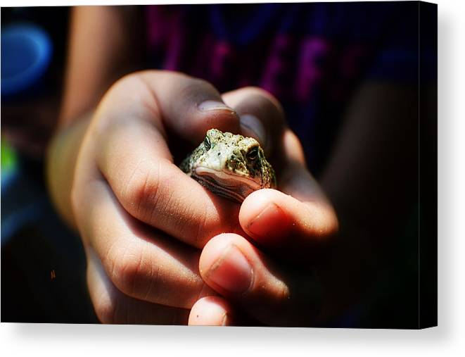 Toad Canvas Print featuring the photograph Little Toad by Adam Vance