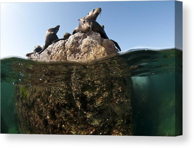 Sea Canvas Print featuring the photograph Looking At You by David Valencia