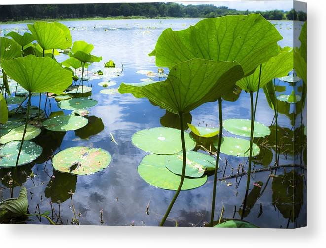 Reflection Color Canvas Print featuring the photograph Looking Toward The Sun by Ellie Teramoto
