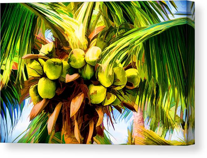 Beach Canvas Print featuring the photograph Lots Of Coconuts by Sabine Edrissi