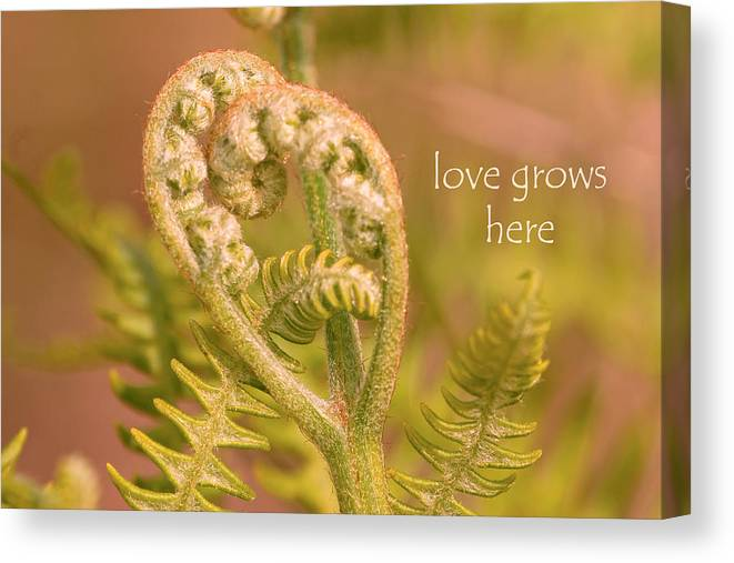 Fern Canvas Print featuring the photograph Love Grows Here by Peggy Collins