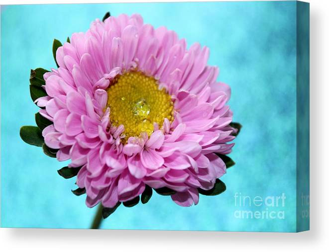 Pink Flower Canvas Print featuring the photograph Love Is True by Krissy Katsimbras