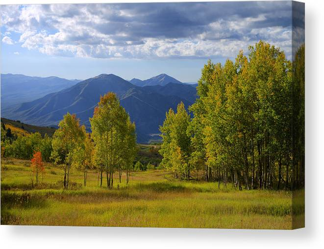 Nature Canvas Print featuring the photograph Meadow Highlights by Chad Dutson