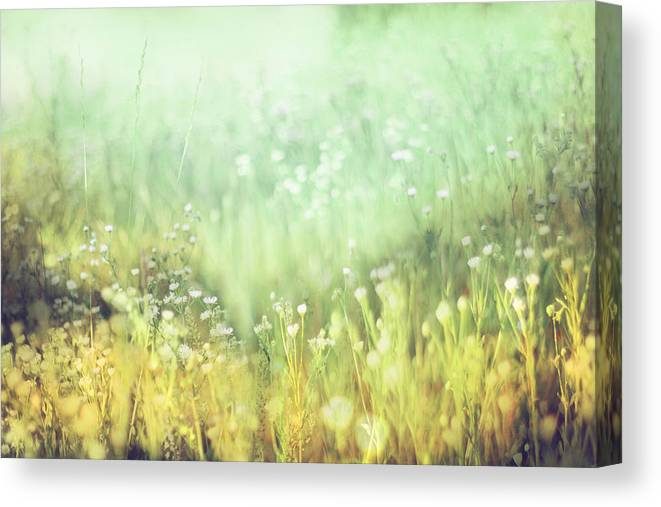 Meadow Canvas Print featuring the photograph Meadowland by Amy Tyler