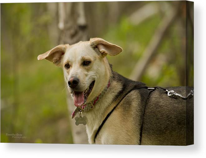 Dog Canvas Print featuring the photograph Meeka by Timothy Gray