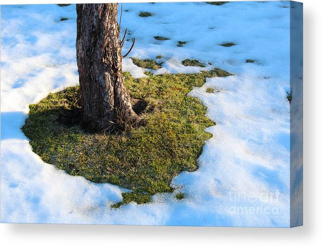 Snow Canvas Print featuring the photograph Melting Snow On Lawn by Kerstin Ivarsson