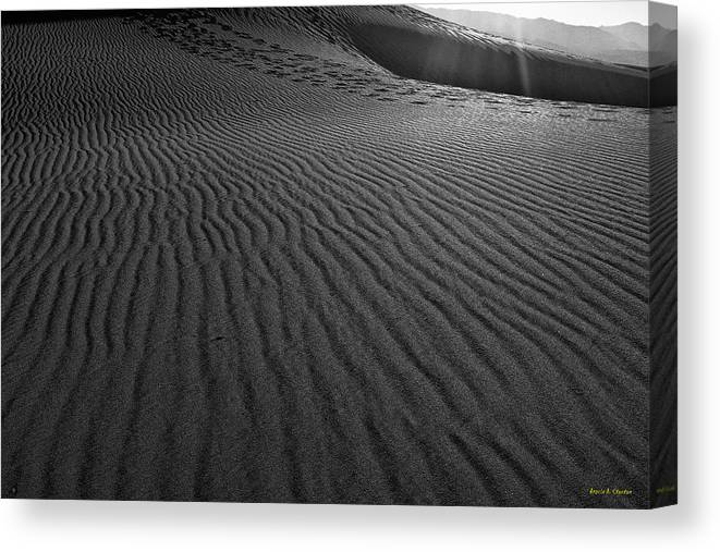 Mesquite Sand Dunes Canvas Print featuring the photograph Mesquite Sand Dunes by Angela Stanton
