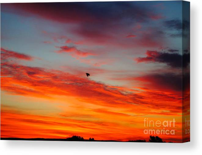 Sunrise Canvas Print featuring the photograph Morning Flight by Jeffery L Bowers