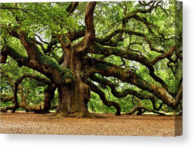 Charleston Canvas Print featuring the photograph Mystical Angel Oak Tree by Louis Dallara