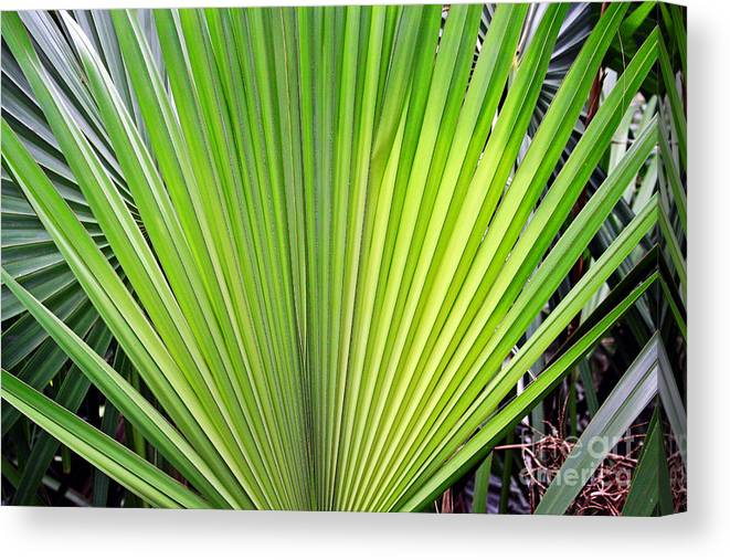 Nature Canvas Print featuring the photograph Needle Palm by Earl Johnson