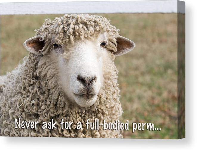 Greeting Card Canvas Print featuring the photograph Never Ask For A Full-bodied Perm by Jeff Abrahamson