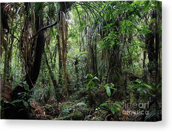 Dschungle Canvas Print featuring the photograph New Zealand Dschungle by Fabian Roessler