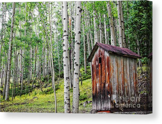Camping Canvas Print featuring the photograph Old Outhouse Among Aspens by Lincoln Rogers