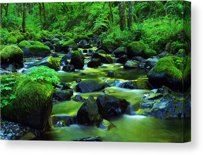 Oregon Streams Canvas Print featuring the photograph On Golden Waters by Jeff Swan