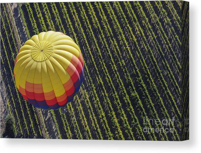 Napa Valley California Winery Wineries Hot Air Balloon Balloons Row Rows Vineyard Vineyards Landscape Landscapes Canvas Print featuring the photograph One From Another by Bob Phillips