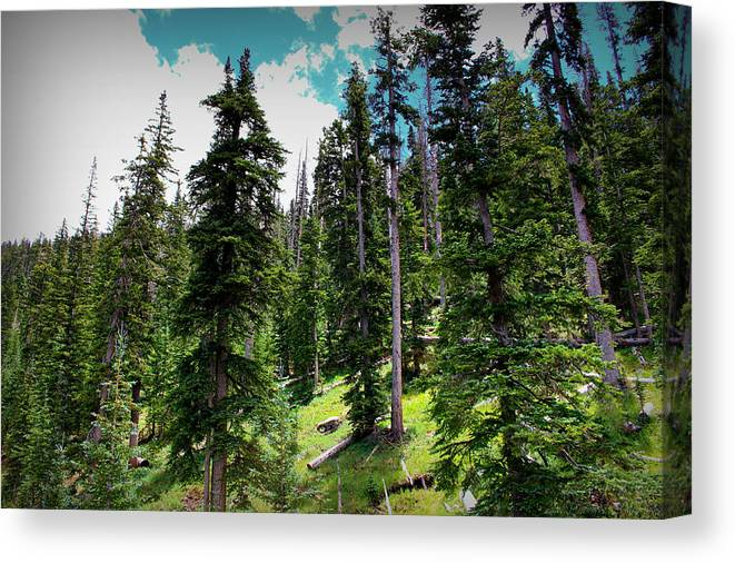 Flagstaff Canvas Print featuring the photograph Open Subalpine Forest by Aaron Burrows