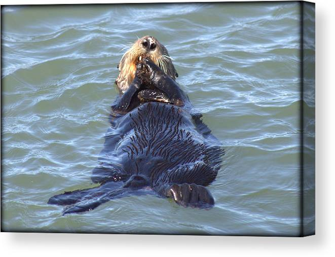 Ocean Canvas Print featuring the photograph Otter 2 by Daniel Jakus