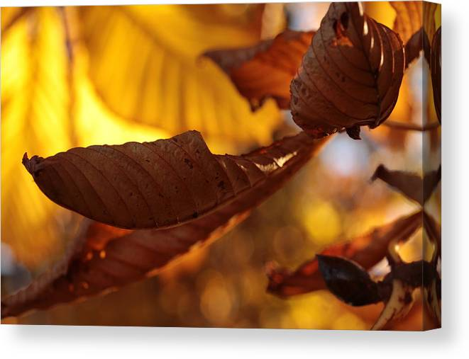 Autumn Canvas Print featuring the photograph Overleaf by Connie Handscomb