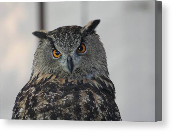Owl Canvas Print featuring the photograph Owl by Jeff Wright