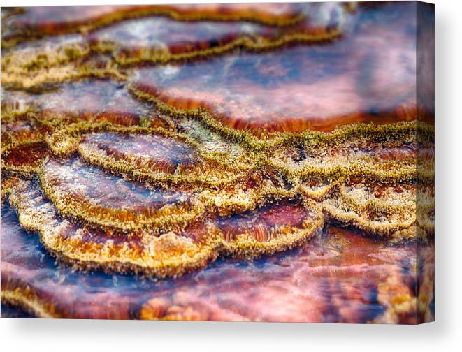 Hot Springs Canvas Print featuring the photograph Pancakes Hot Springs by Scott Campbell