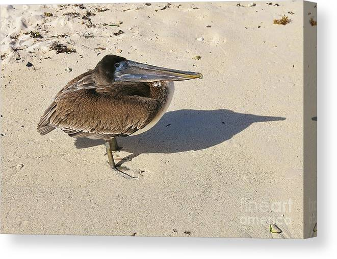 Bird Canvas Print featuring the photograph Pelican And His Shadow by Teresa Zieba