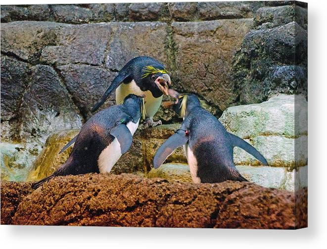 Penguins Canvas Print featuring the photograph Penguin Talk by Cheryl Cencich