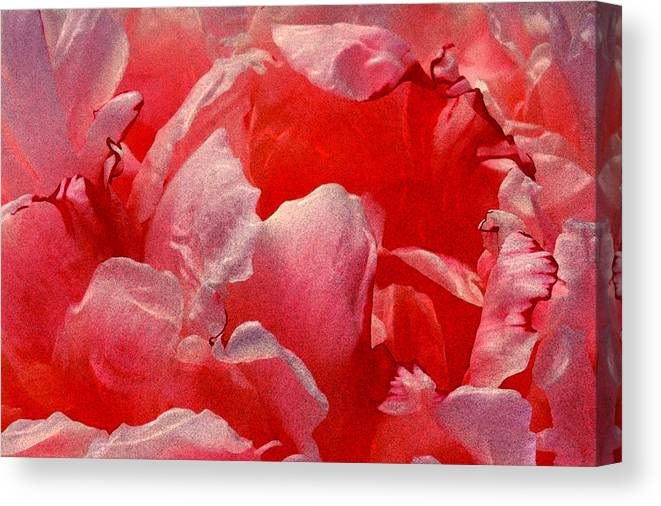 Pink Canvas Print featuring the photograph Peony Vii by Michael Moschogianis