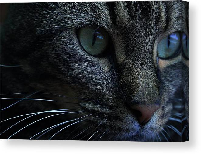 Animals/nature Canvas Print featuring the photograph Photographer by Alison Emmanuel