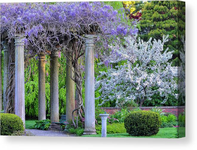 Flowers Canvas Print featuring the photograph Pillars Of Wisteria by Michael Hubley