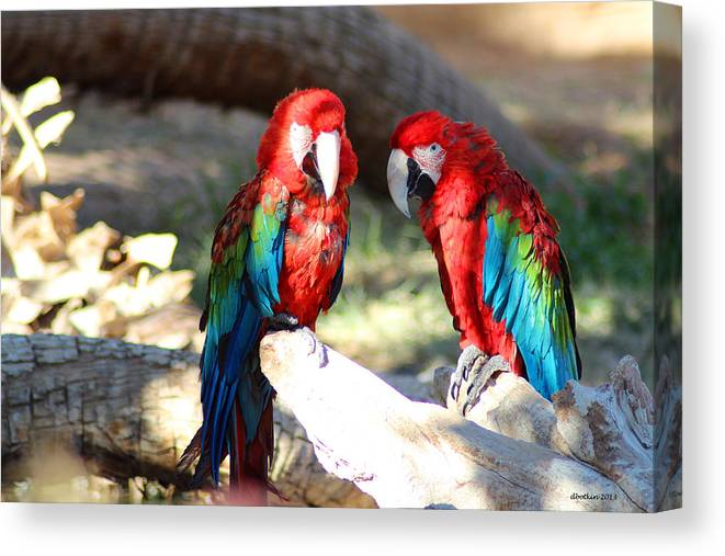 Zoo Canvas Print featuring the photograph Polly And Pauly by Dick Botkin