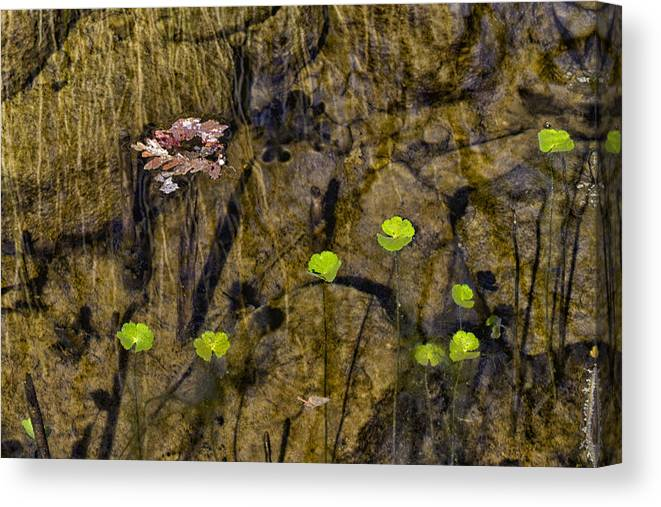 Water Canvas Print featuring the photograph Pond Scene by Robert Woodward