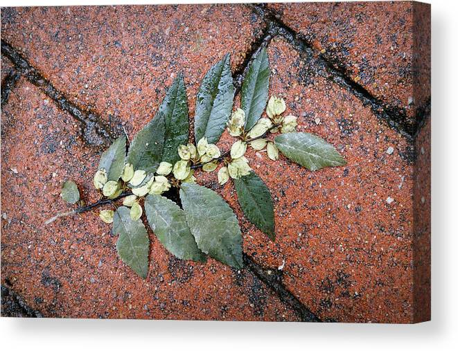 Leaf Canvas Print featuring the photograph Rainy Day On Fallen Leaves by Ann Powell
