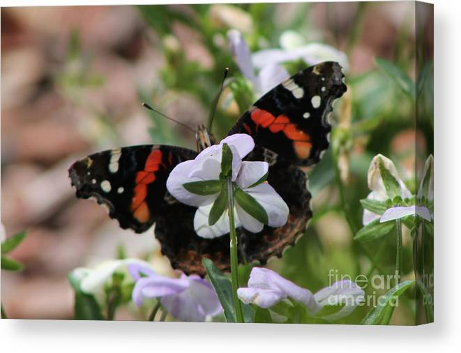 Butterfly Canvas Print featuring the photograph Red Admiral by Sarah Boyd