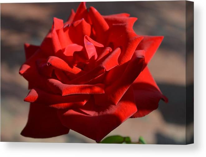 Flower Canvas Print featuring the photograph Red Beauty by Quita Jean
