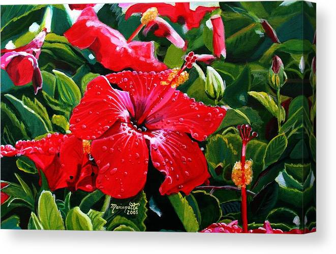 Red Hibiscus Canvas Print featuring the painting Red Hibiscus by Marionette Taboniar