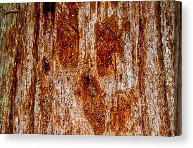 Gaint Redwood Tree Canvas Print featuring the photograph Redwood Spirit by Brian Williamson