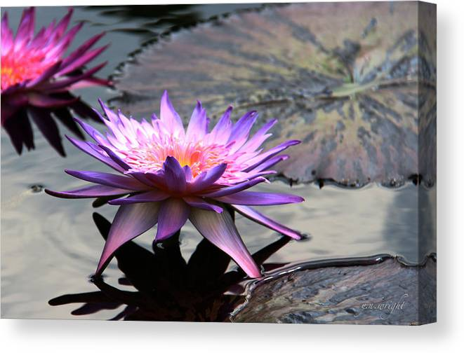 Photograph Canvas Print featuring the photograph Dark Water Reflections by Yvonne Wright